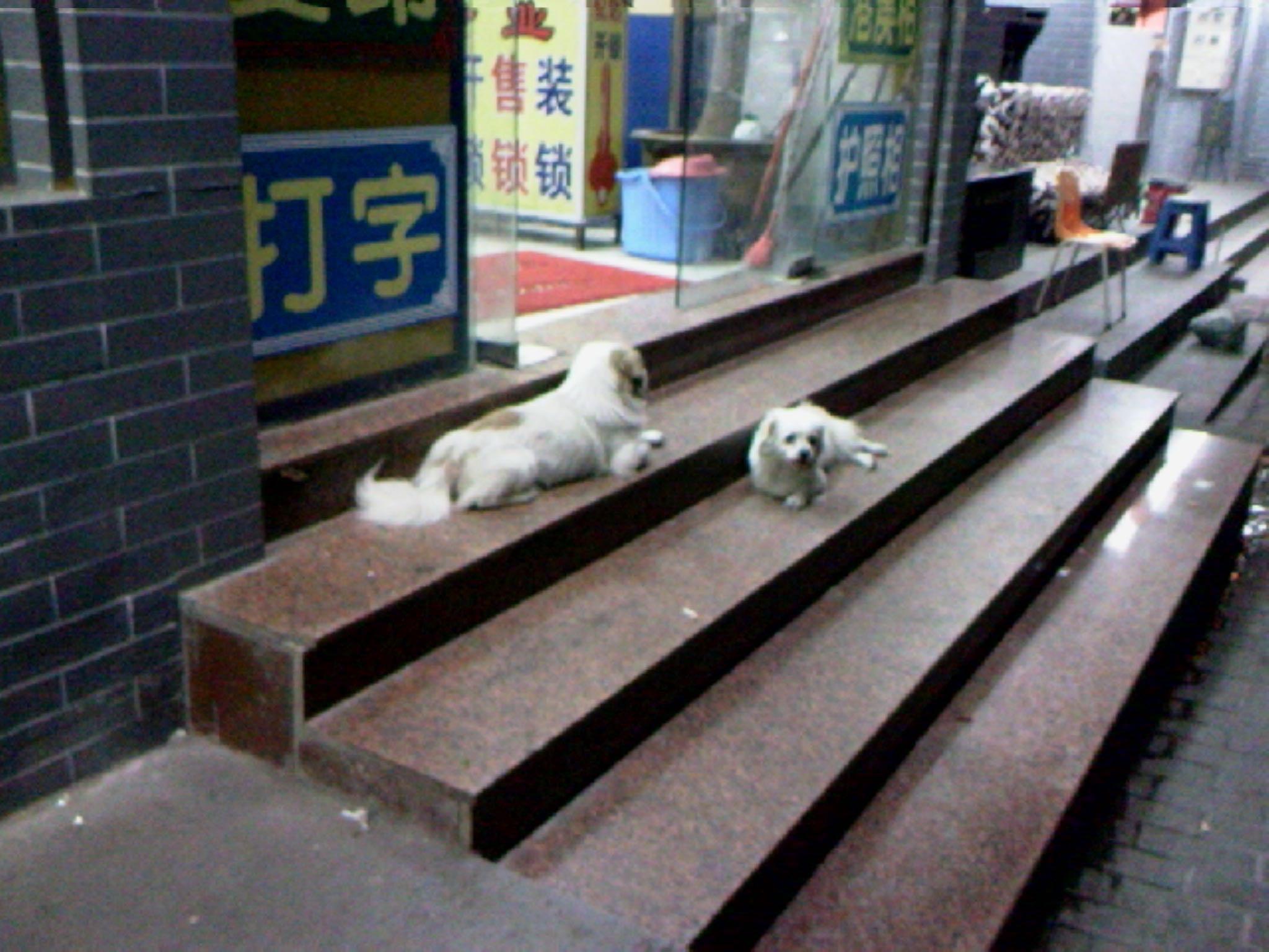 古城里的狗狗