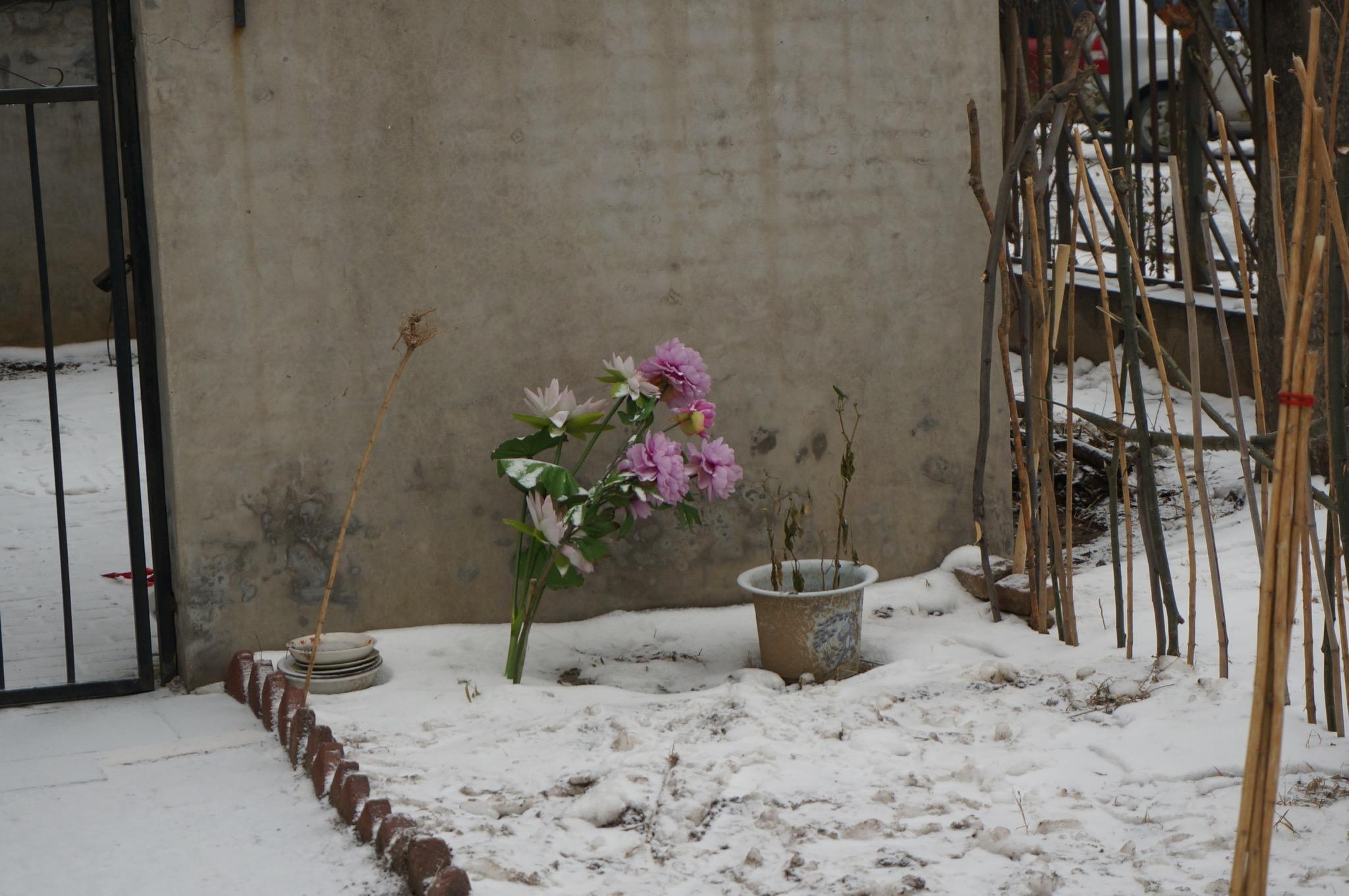 雪中仍然坚强存活的花朵