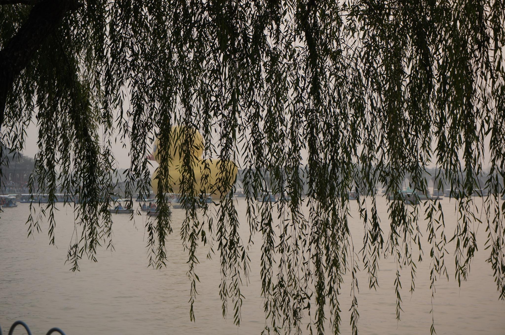 颐和园有大黄鸭来访