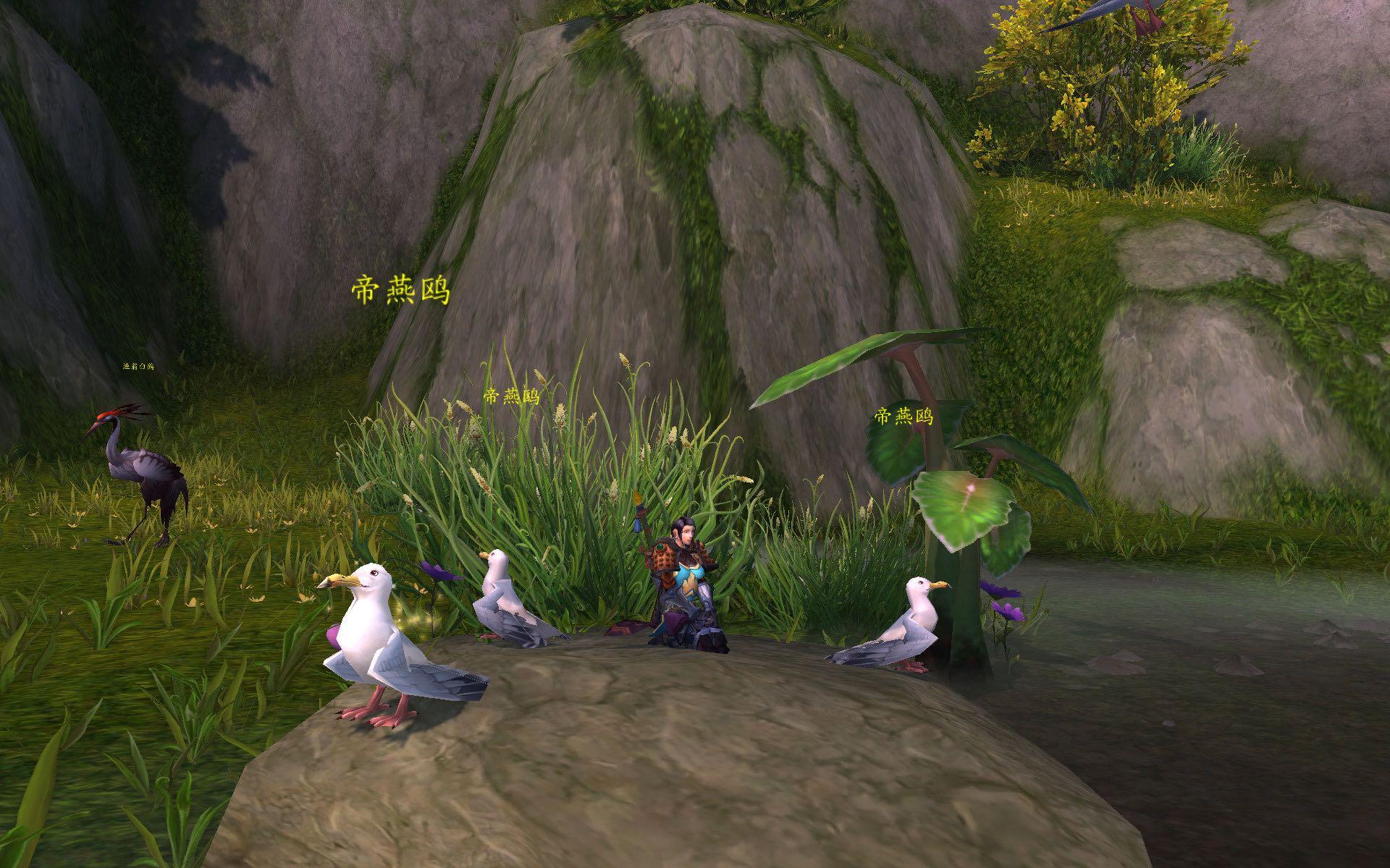 四风谷的帝燕鸥