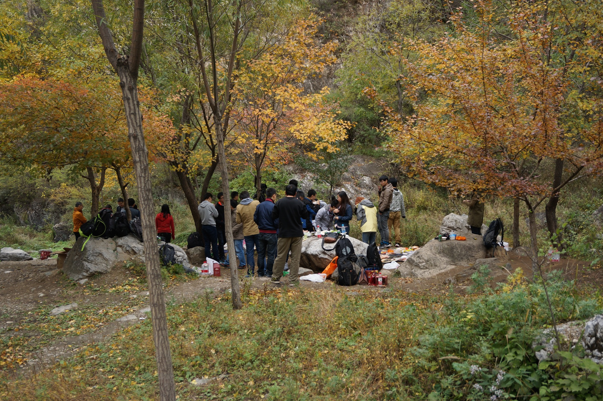 秋季树木掩映下的烧烤饭局
