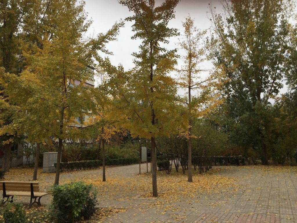 这个时候的秋天最美