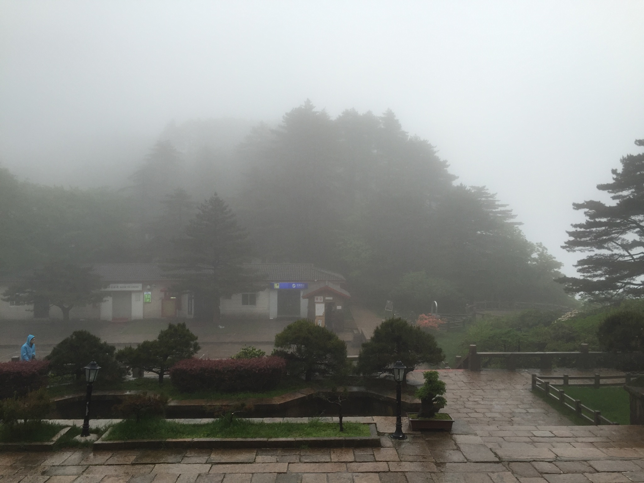 今早起床,见识到了黄山的云雾