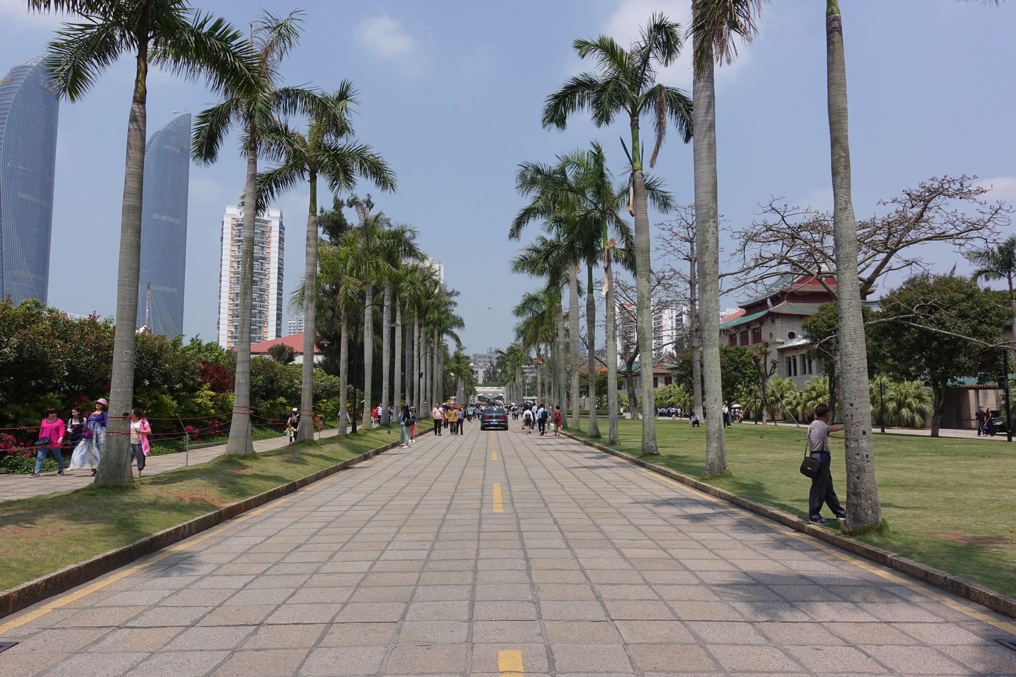 厦大椰子林道路