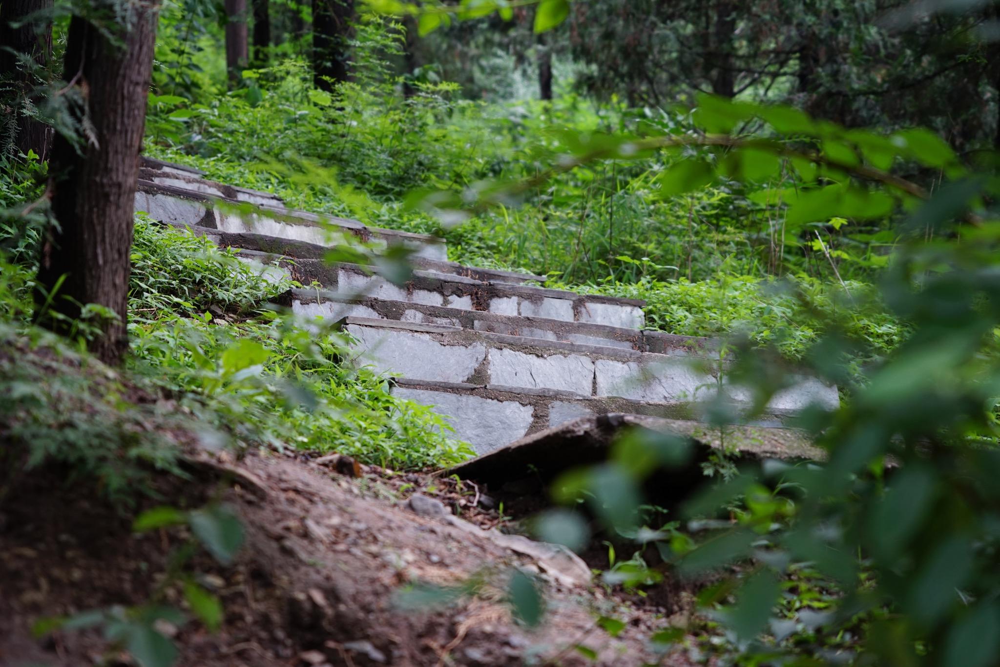上山路上翠绿植物中的石阶