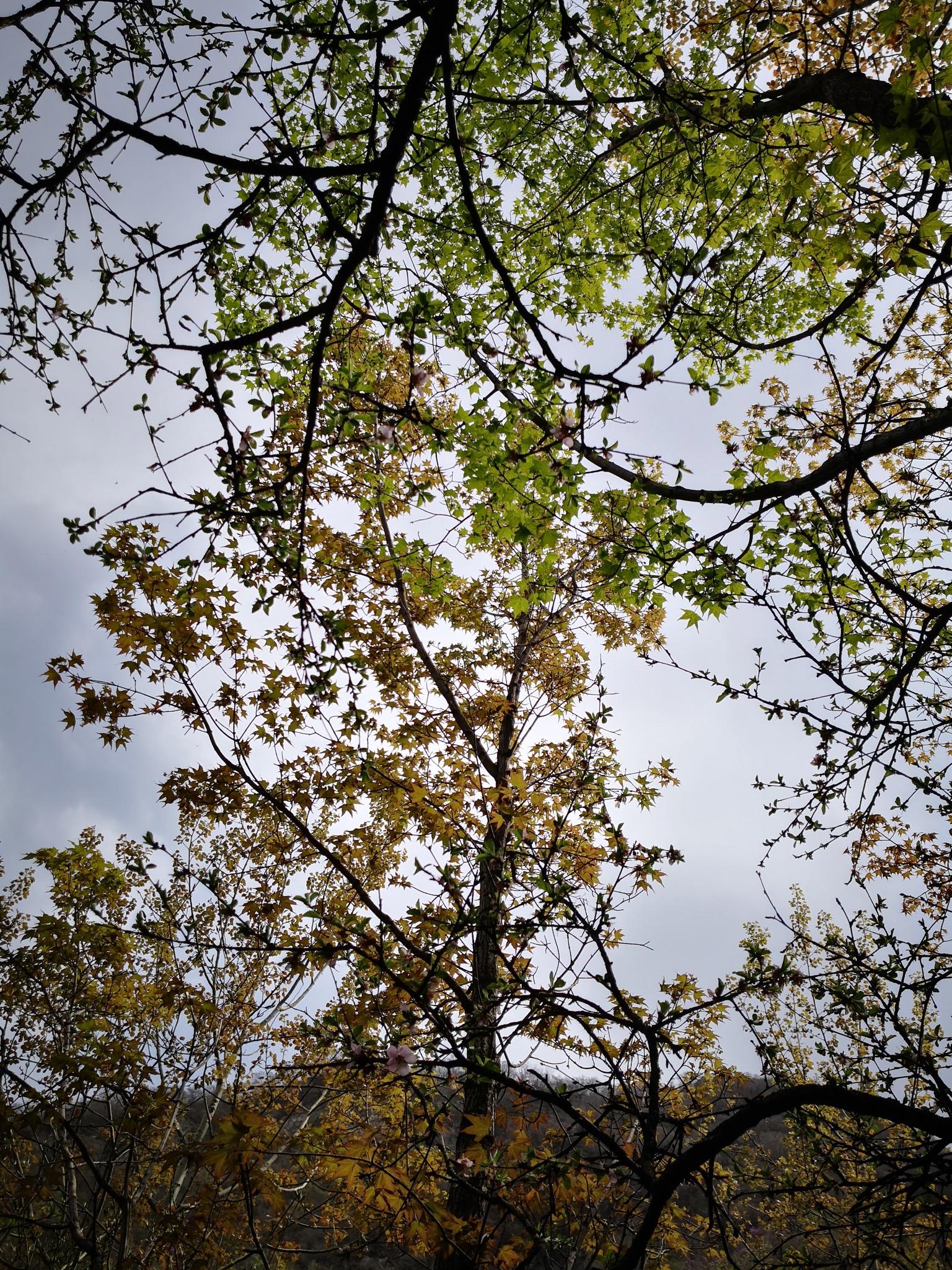 绿叶和黄叶