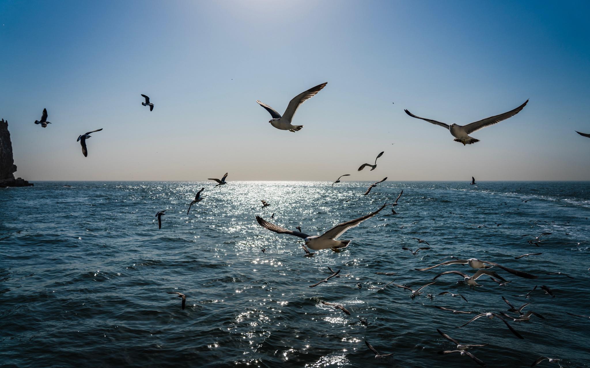 逆光的海鸥
