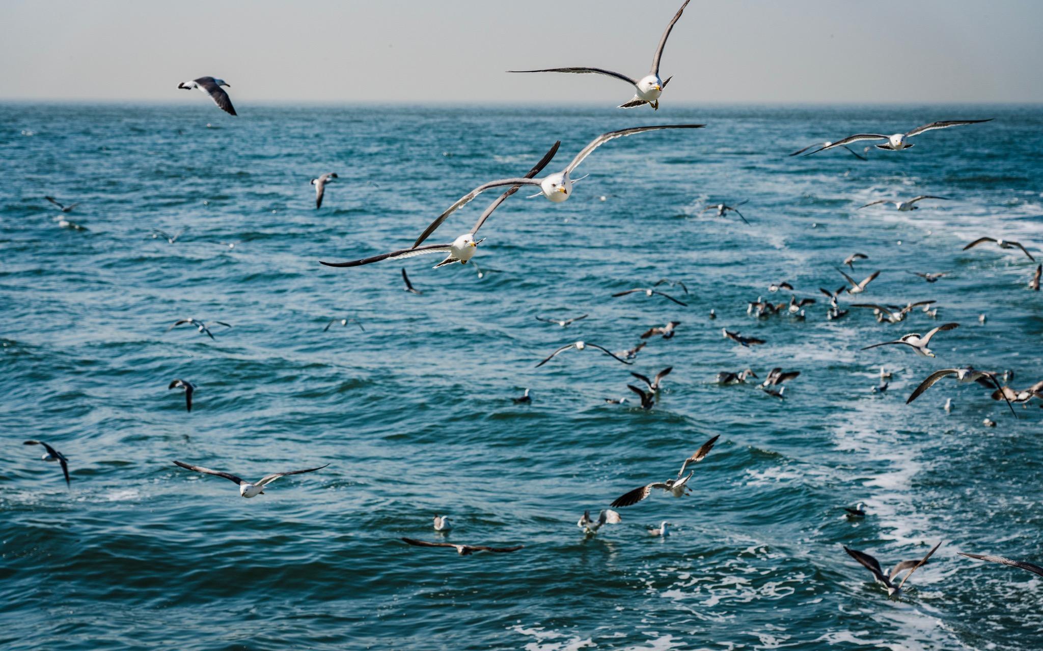 尾行的海鸥